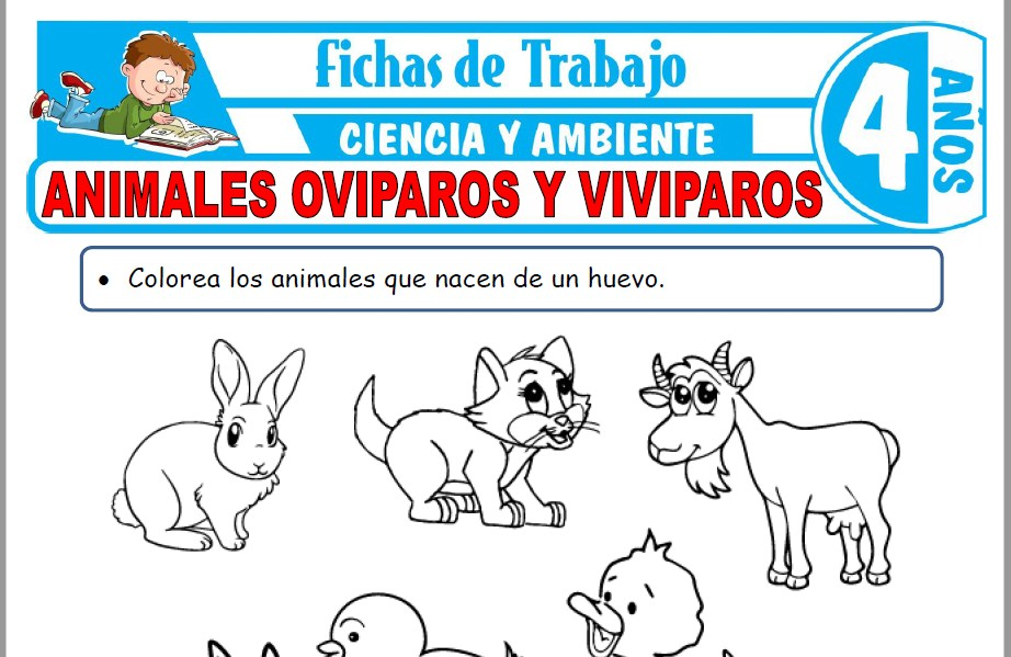 Modelos de la Ficha de Animales ovíparos y vivíparos para Niños de Cuatro Años