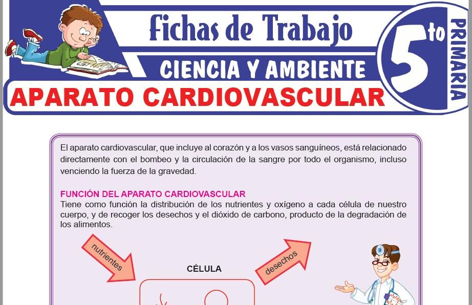Modelos de la Ficha de Aparato cardiovascular para Quinto de Primaria