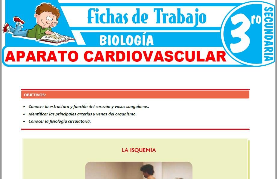 Modelos de la Ficha de Aparato cardiovascular para Tercero de Secundaria