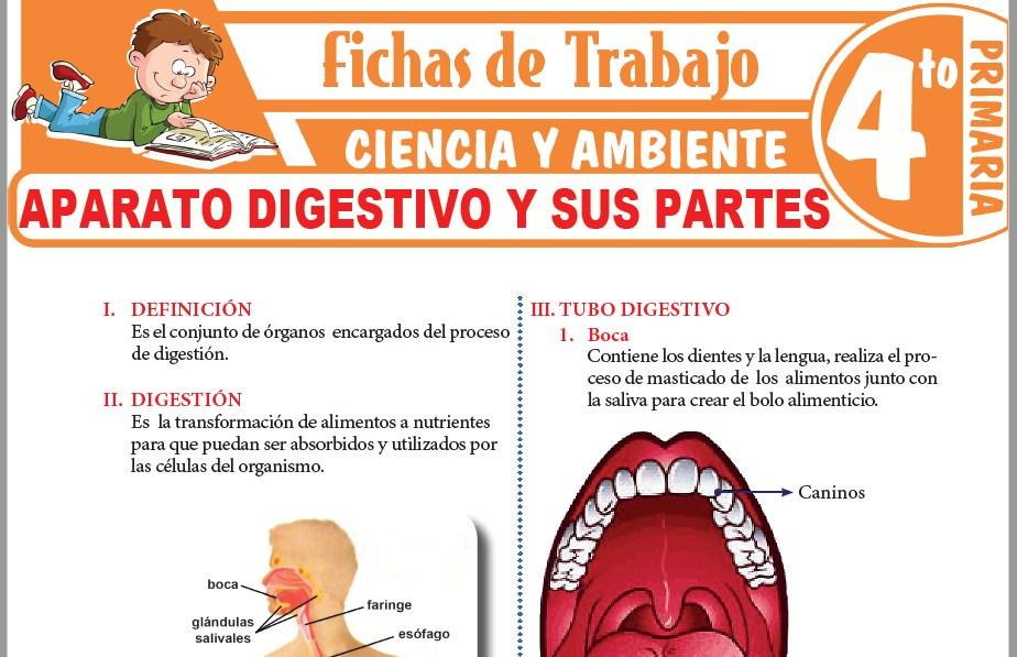 Modelos de la Ficha de Aparato digestivo y sus partes para Cuarto de Primaria