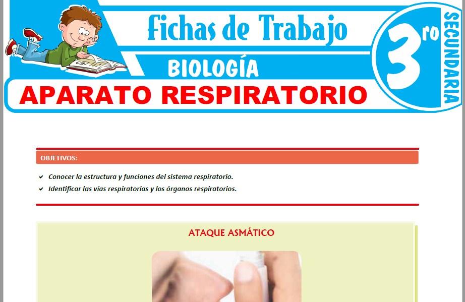 Modelos de la Ficha de Aparato respiratorio para Tercero de Secundaria