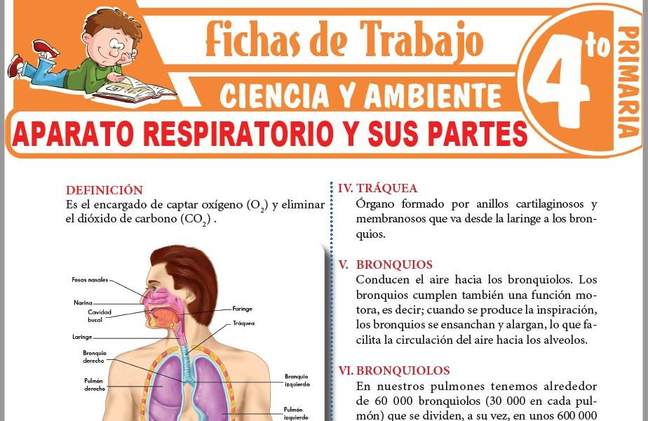 Modelos de la Ficha de Aparato respiratorio y sus partes para Cuarto de Primaria