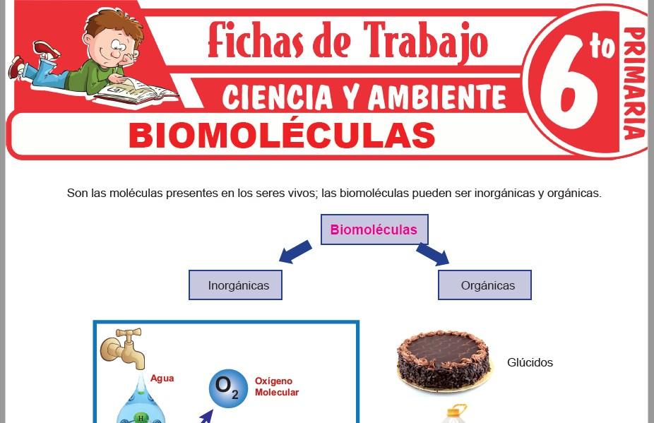 Modelos de la Ficha de Biomoléculas para Sexto de Primaria