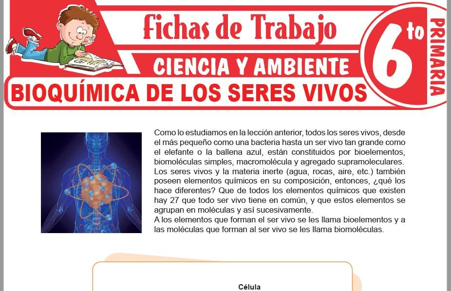 Modelos de la Ficha de Bioquímica de los seres vivos para Sexto de Primaria