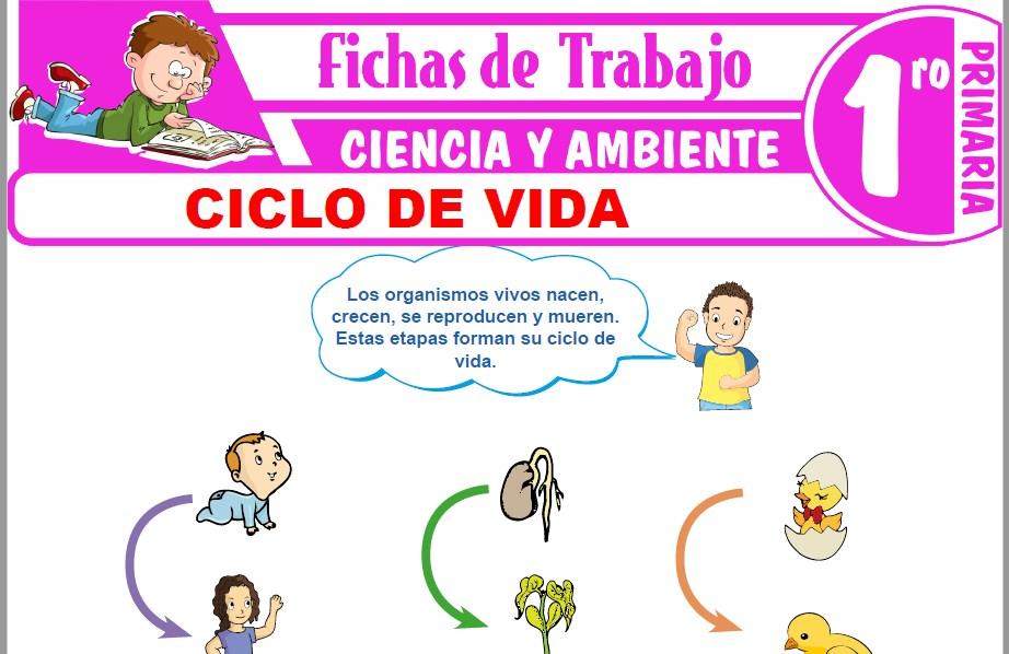 Modelos de la Ficha de Ciclo de vida para Primero de Primaria