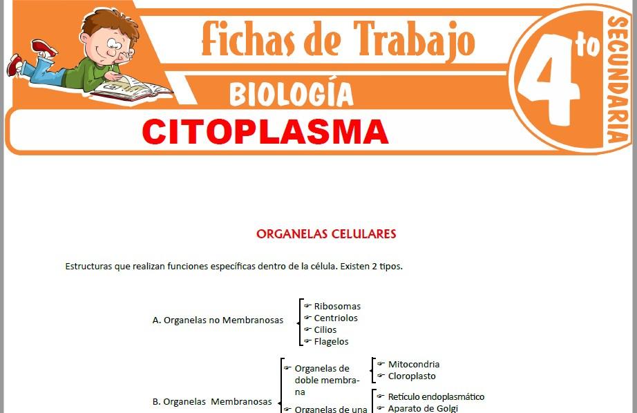 Modelos de la Ficha de Citoplasma para Cuarto de Secundaria