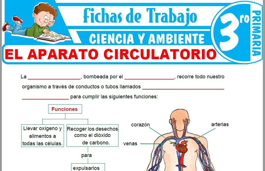 Modelos de la Ficha de El Aparato Circulatorio para Tercero de Primaria