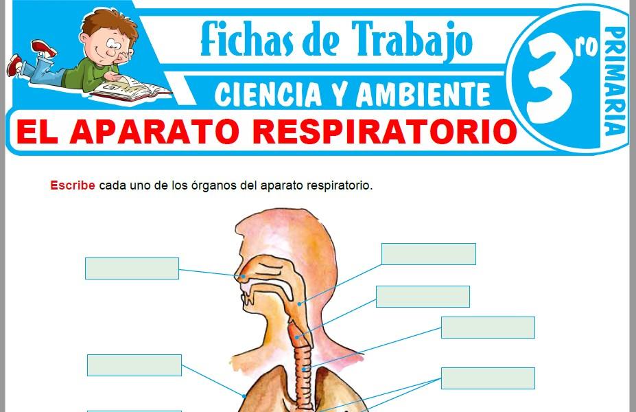 Modelos de la Ficha de El Aparato Respiratorio para Tercero de Primaria