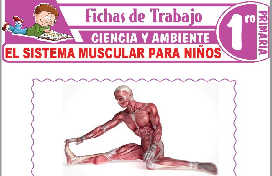Modelos de la Ficha de El Sistema muscular para niños para Primero de Primaria