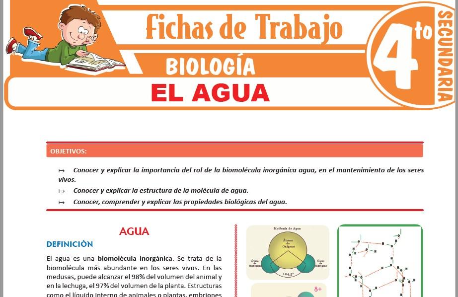 Modelos de la Ficha de El agua para Cuarto de Secundaria
