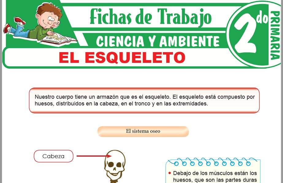 Modelos de la Ficha de El esqueleto para Segundo de Primaria