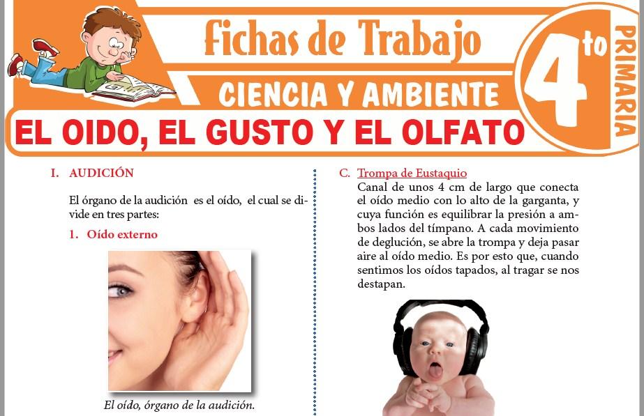 Modelos de la Ficha de El oido, el gusto y el olfato para Cuarto de Primaria
