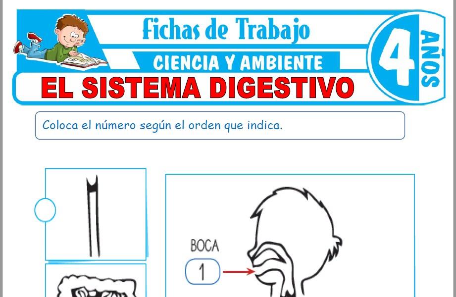 Modelos de la Ficha de El sistema digestivo para Niños de Cuatro Años