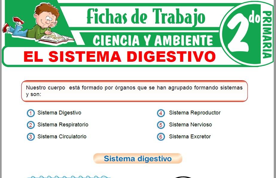 Modelos de la Ficha de El sistema digestivo para Segundo de Primaria
