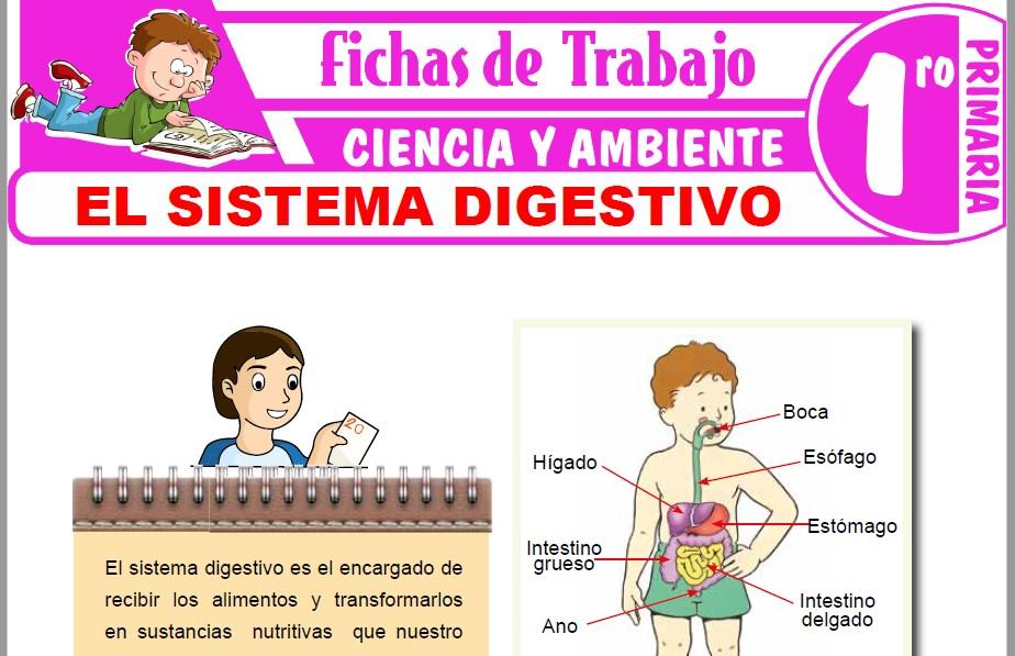 Modelos de la Ficha de El sistema digestivo para niños para Primero de Primaria