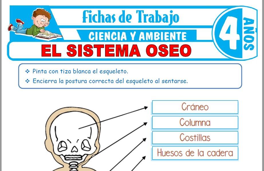 Modelos de la Ficha de El sistema óseo para Niños de Cuatro Años