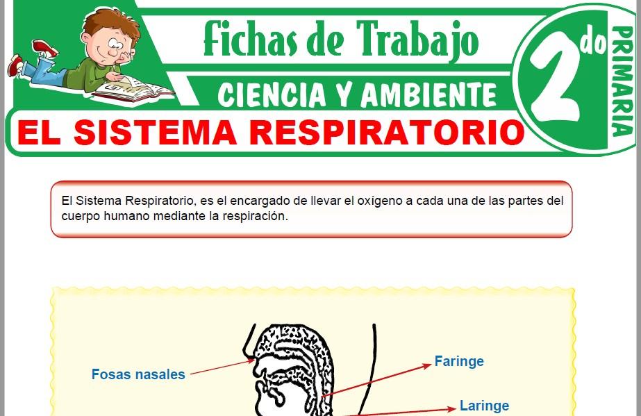 Modelos de la Ficha de El sistema respiratorio para Segundo de Primaria