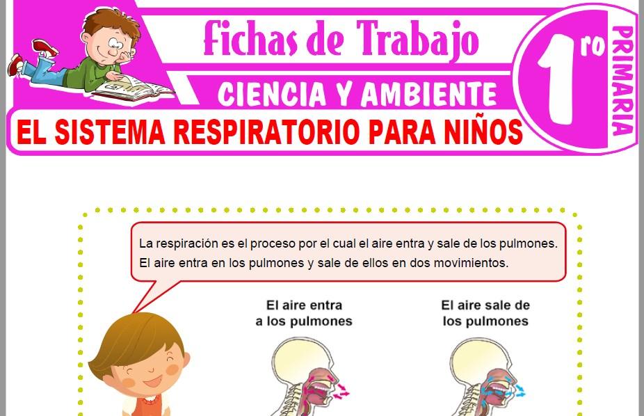 Modelos de la Ficha de El sistema respiratorio para niños para Primero de Primaria