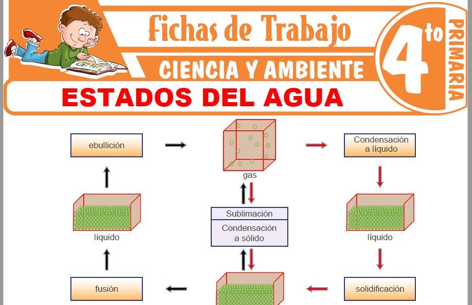 Modelos de la Ficha de Estados del agua para Cuarto de Primaria