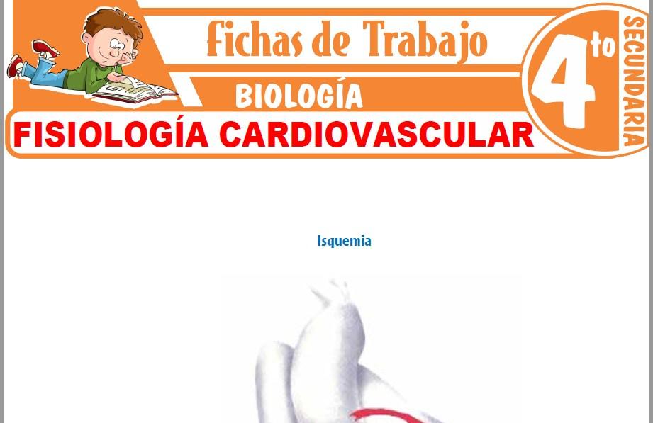 Modelos de la Ficha de Fisiología cardiovascular para Cuarto de Secundaria