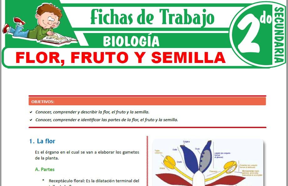 Modelos de la Ficha de Flor, fruto y semilla para Segundo de Secundaria