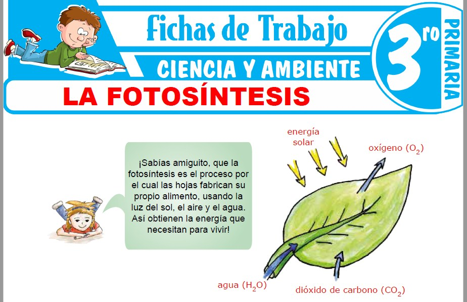 Modelos de la Ficha de La fotosíntesis para Tercero de Primaria