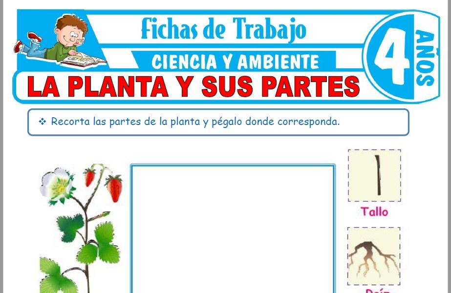 Modelos de la Ficha de La planta y sus partes para Niños de Cuatro Años