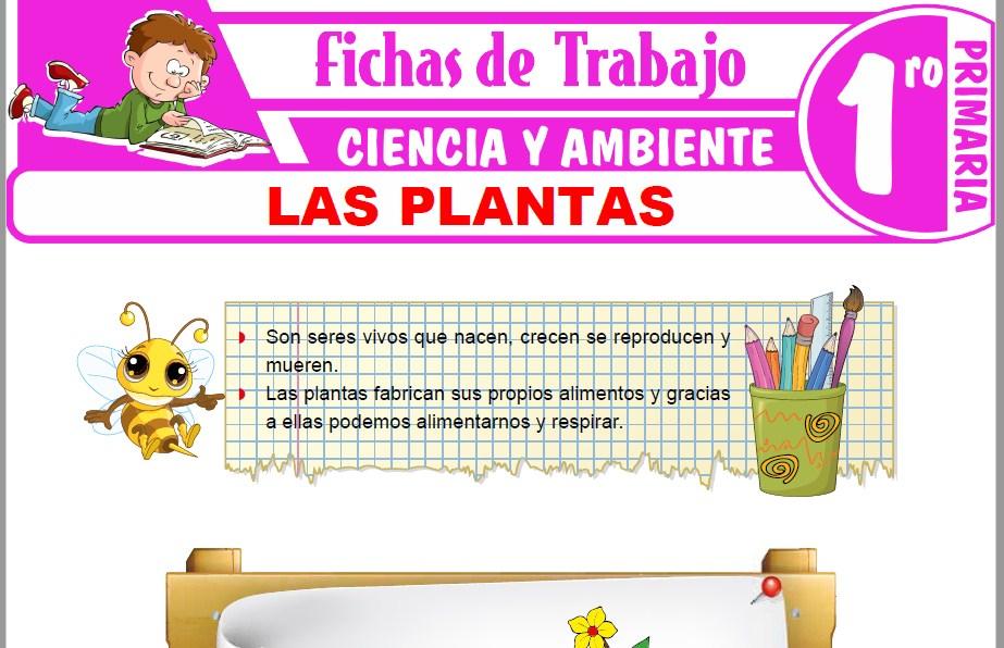 Modelos de la Ficha de Las plantas para Primero de Primaria