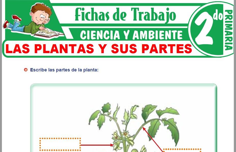Modelos de la Ficha de Las plantas y sus partes para Segundo de Primaria