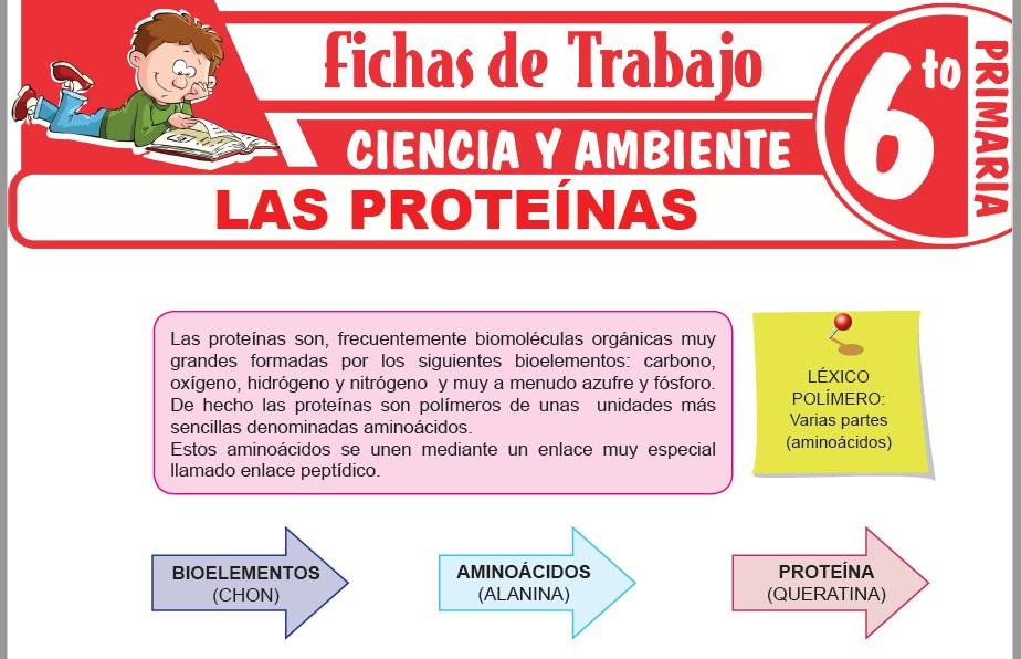Modelos de la Ficha de Las proteínas para Sexto de Primaria