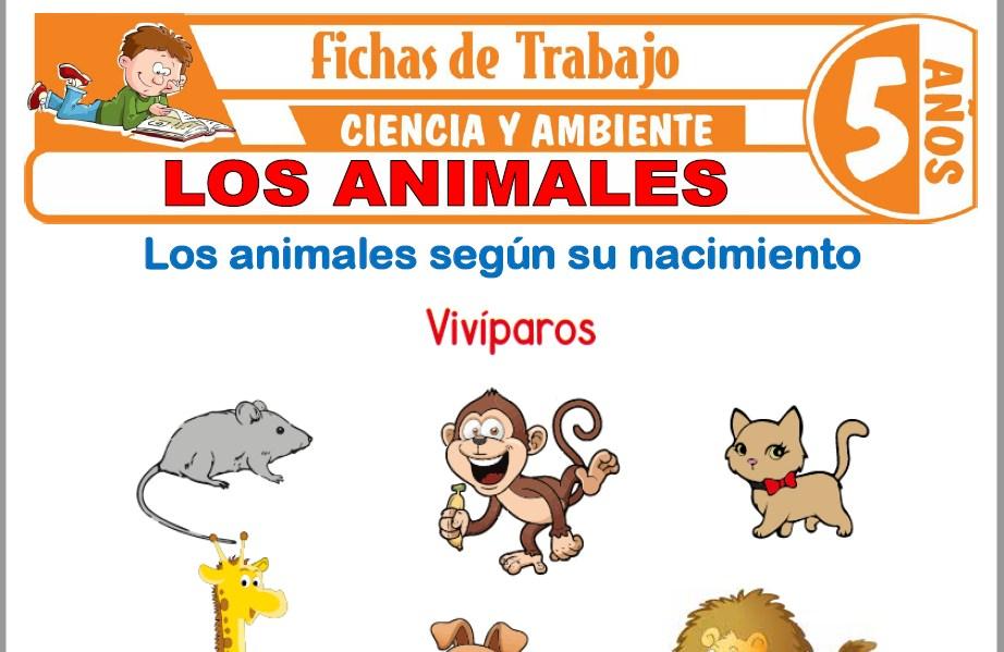 Modelos de la Ficha de Los animales para Niños de Cinco Años