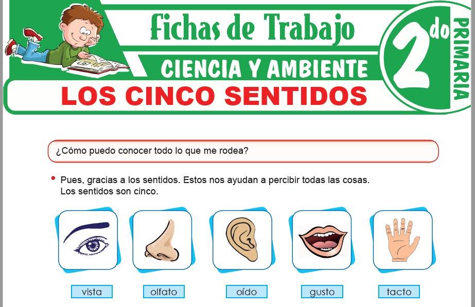 Modelos de la Ficha de Los cinco sentidos para Segundo de Primaria