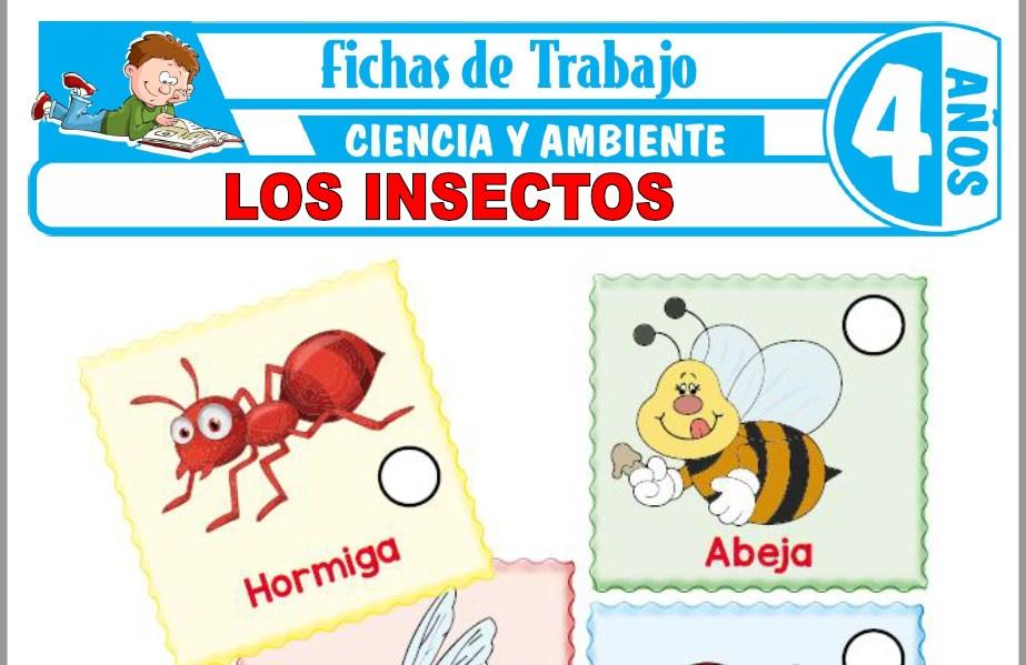 Modelos de la Ficha de Los insectos para Niños de Cuatro Años