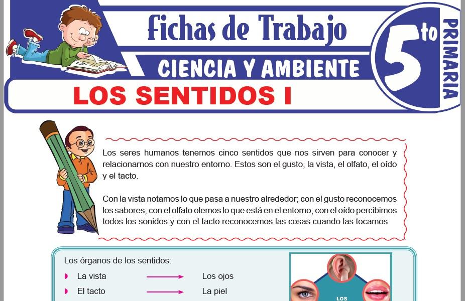 Modelos de la Ficha de Los sentidos I para Quinto de Primaria