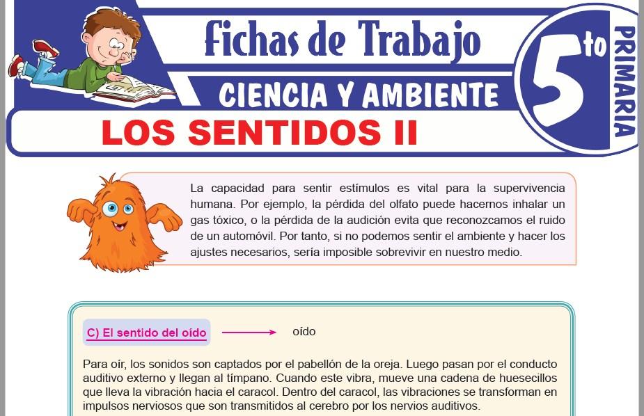 Modelos de la Ficha de Los sentidos II para Quinto de Primaria