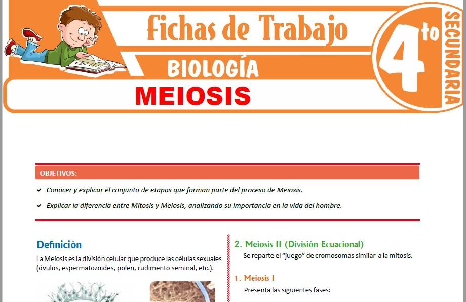 Modelos de la Ficha de Meiosis para Cuarto de Secundaria
