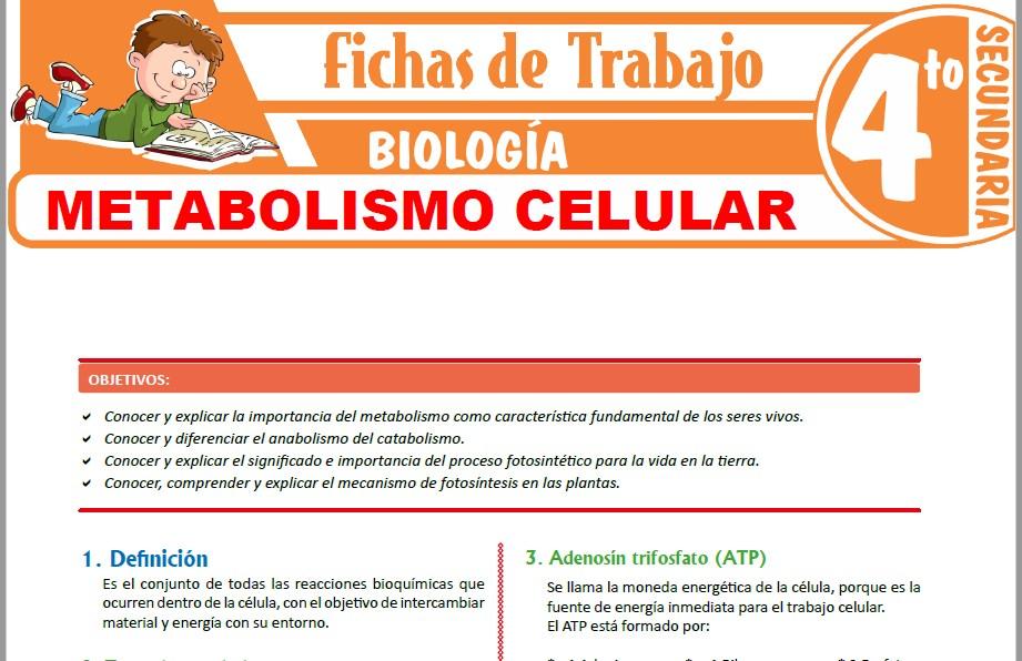 Modelos de la Ficha de Metabolismo celular para Cuarto de Secundaria