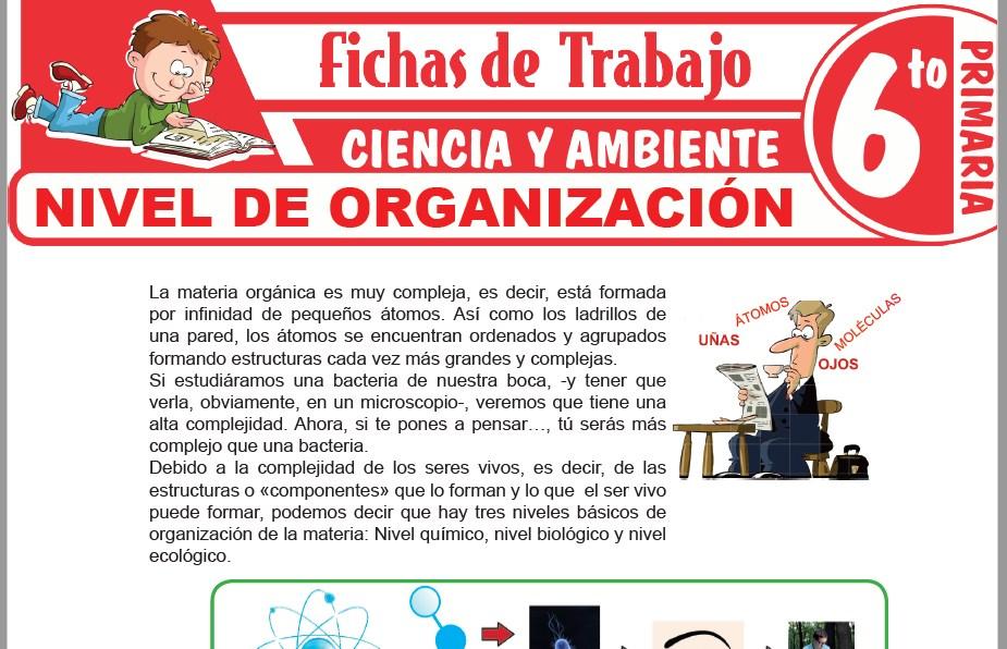 Modelos de la Ficha de Nivel de organización para Sexto de Primaria