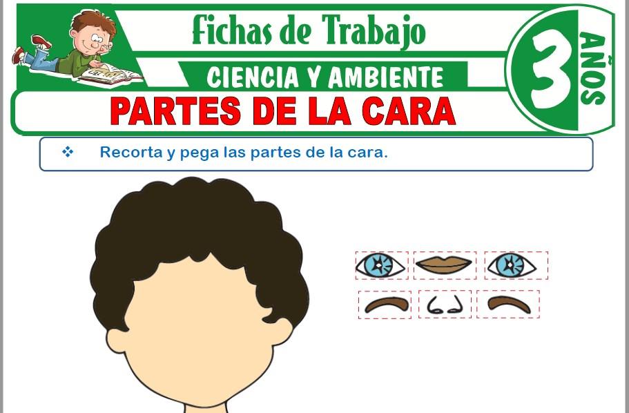 Modelos de la Ficha de Partes de la cara para Niños de Tres Años