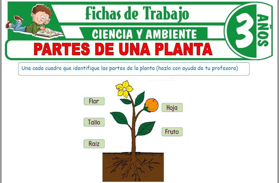 Modelos de la Ficha de Partes de una planta para Niños de Tres Años