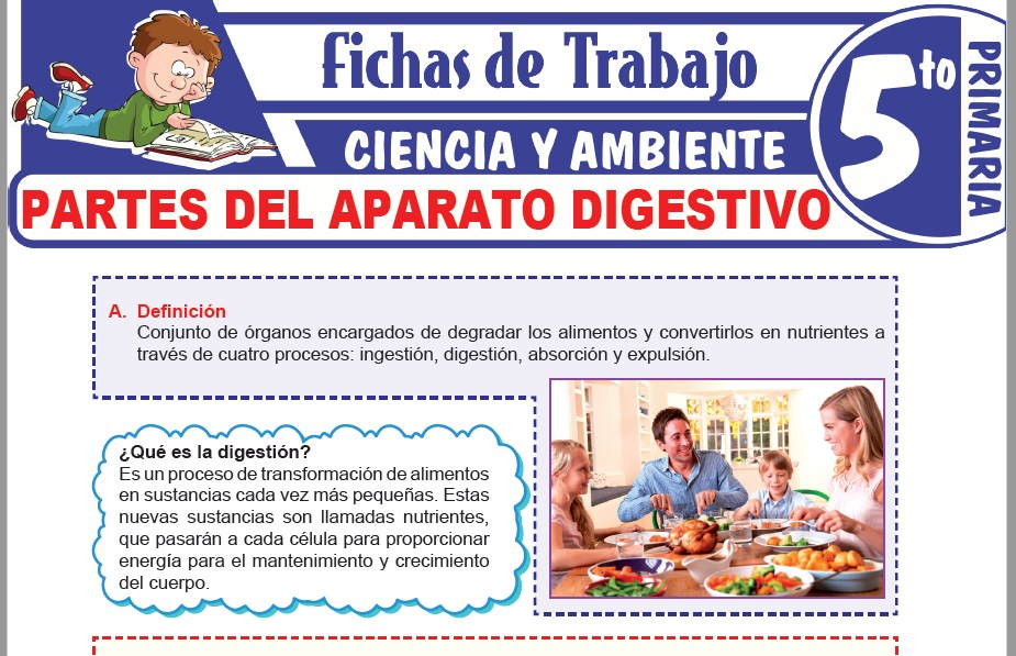 Modelos de la Ficha de Partes del aparato digestivo para Quinto de Primaria