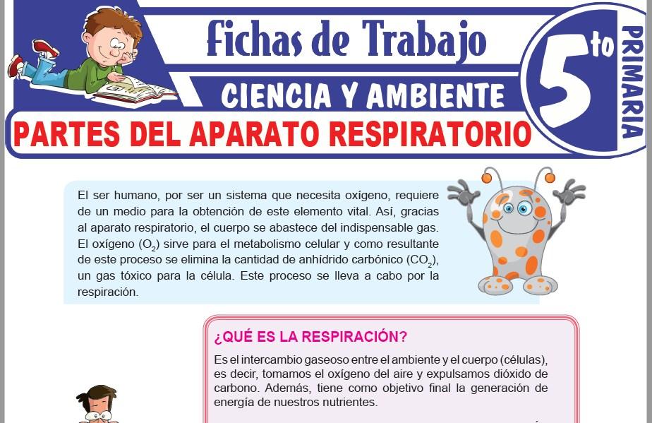 Modelos de la Ficha de Partes del aparato respiratorio para Quinto de Primaria