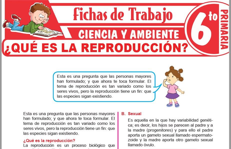 Modelos de la Ficha de ¿Qué es la reproducción? para Sexto de Primaria