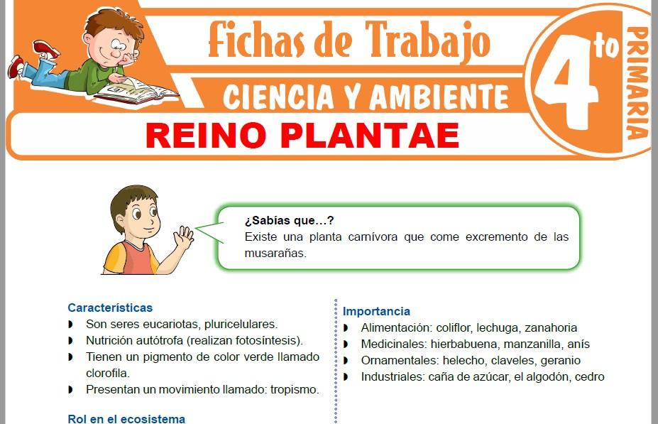 Modelos de la Ficha de Reino Plantae para Cuarto de Primaria