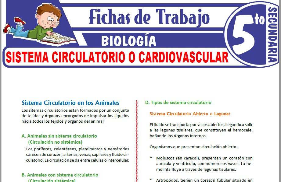 Modelos de la Ficha de Sistema Circulatorio o Cardiovascular para Quinto de Secundaria
