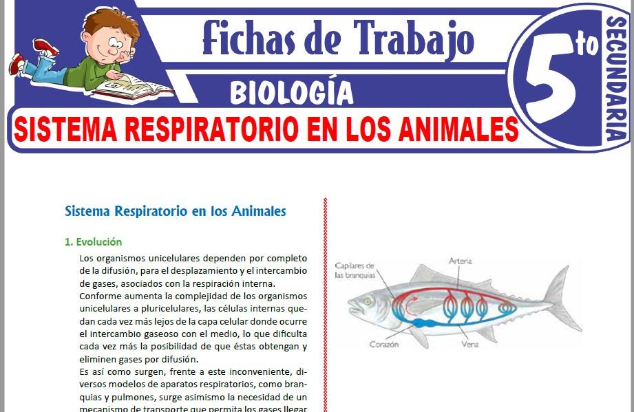 Modelos de la Ficha de Sistema Respiratorio en los Animales para Quinto de Secundaria