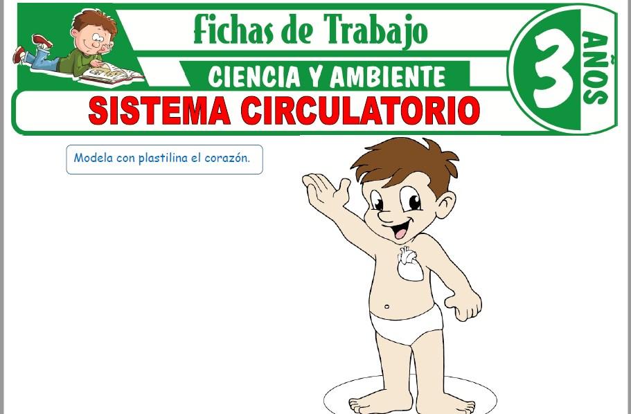 Modelos de la Ficha de Sistema circulatorio para Niños de Tres Años