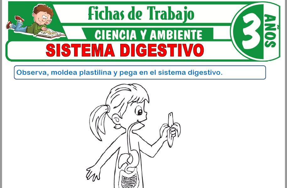 Modelos de la Ficha de Sistema digestivo para Niños de Tres Años