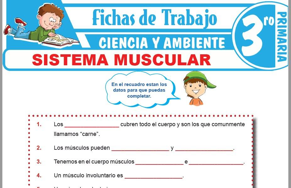 Modelos de la Ficha de Sistema muscular para Tercero de Primaria