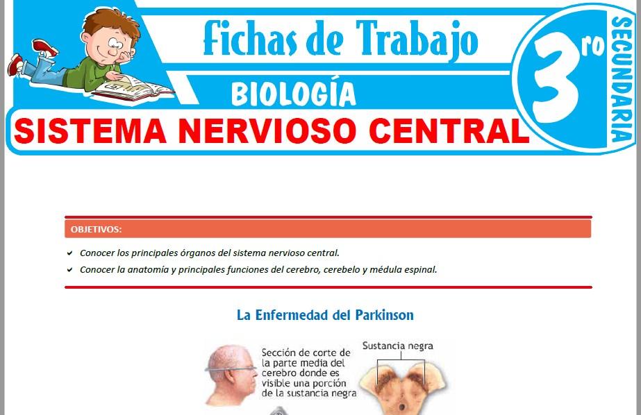 Modelos de la Ficha de Sistema nervioso central para Tercero de Secundaria